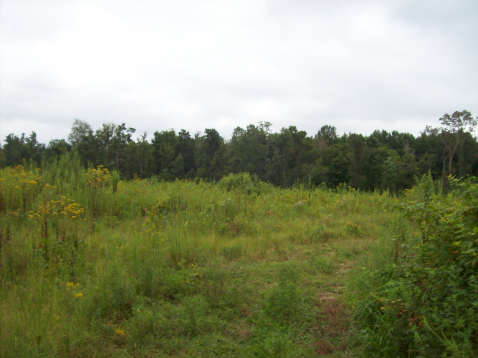Vacant land in Lawrence Co. TN.