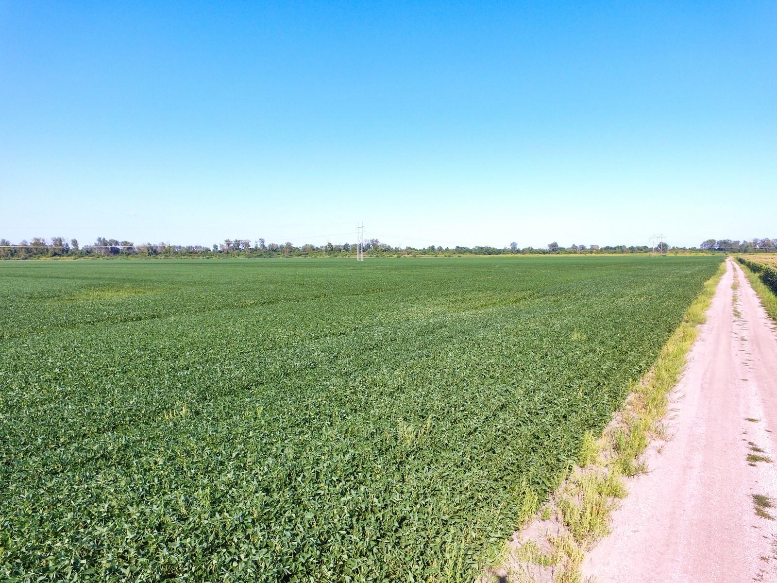 Missouri River Bottom Cropland For Sale