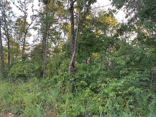 23 Acres in Gatewood