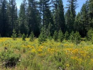 20 Acres Near Beautiful Coeur d' Alene Idaho