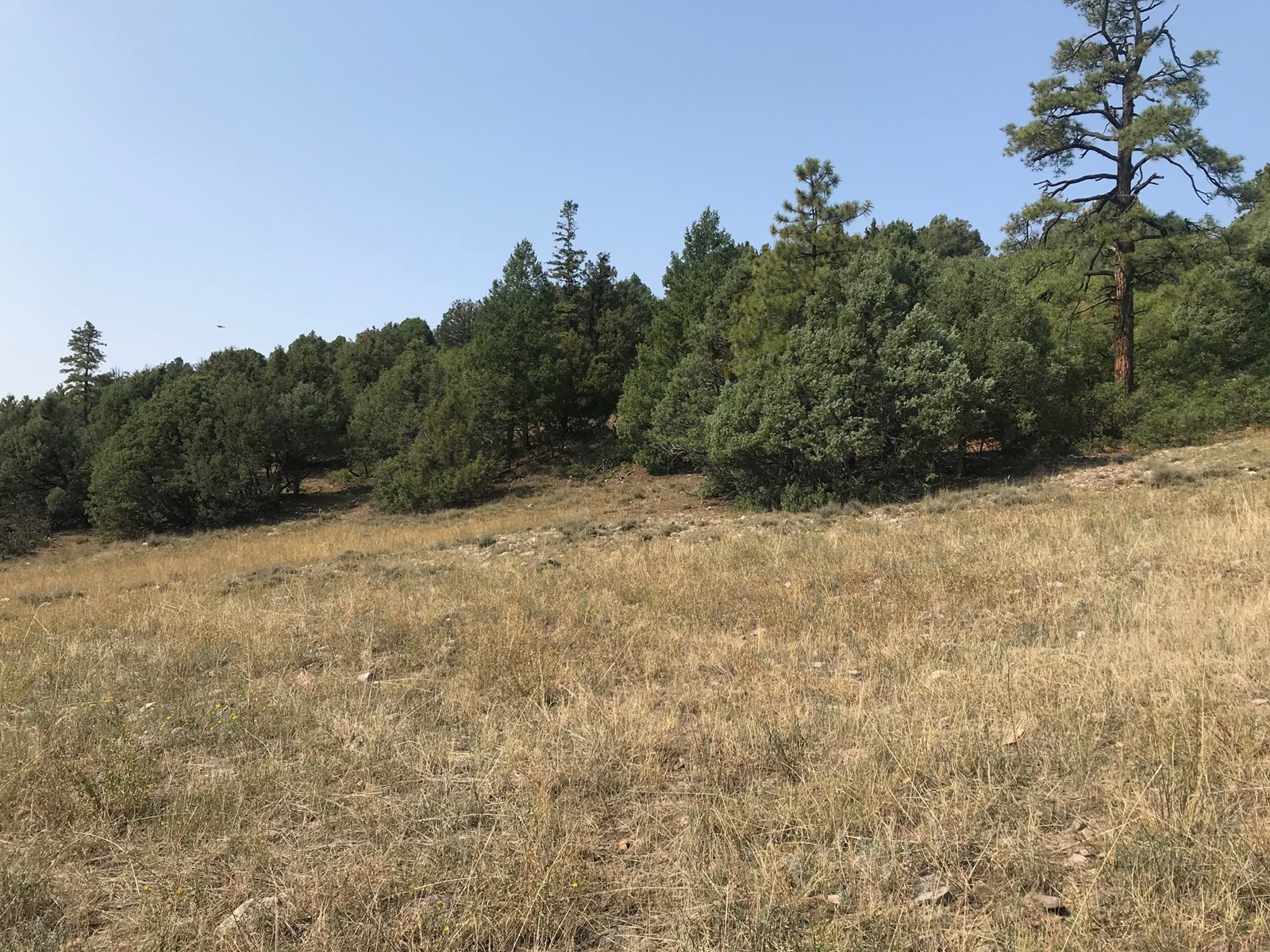 Recreational Land for Sale near Chama NM with Southern Exp