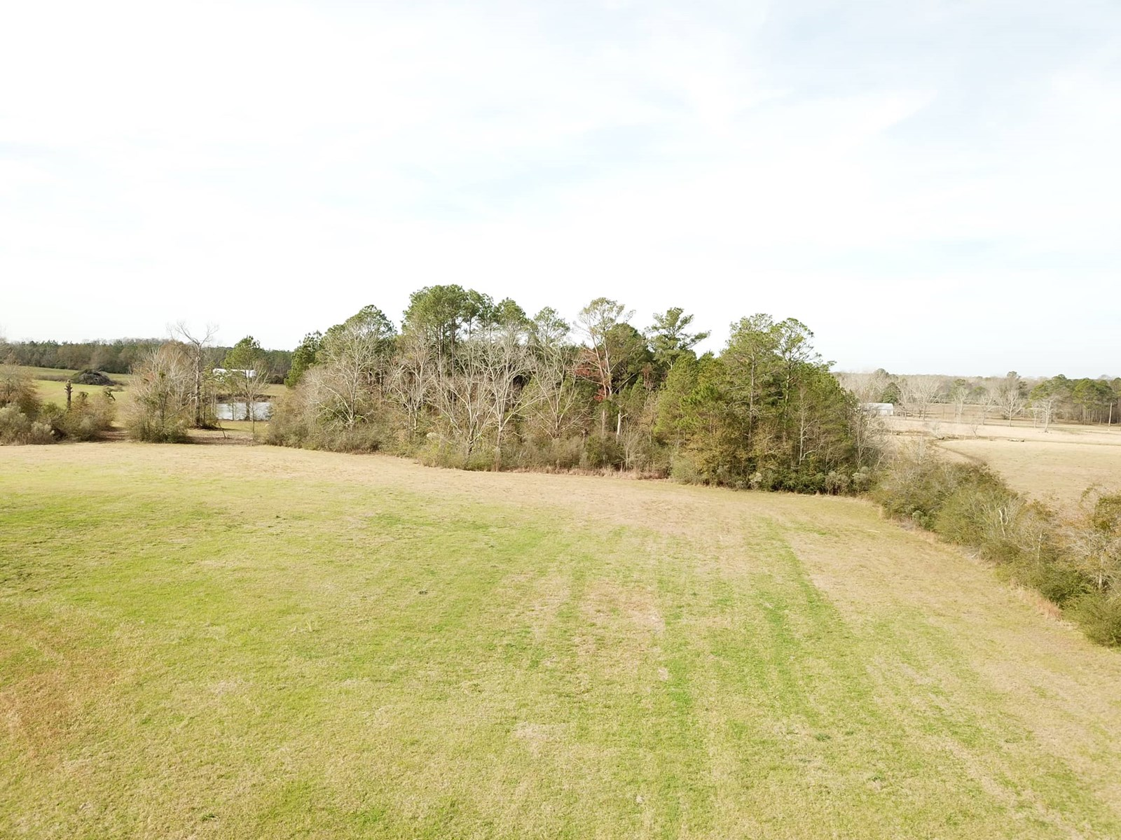 39.54 ACRES FOR SALE SLOCOMB, AL