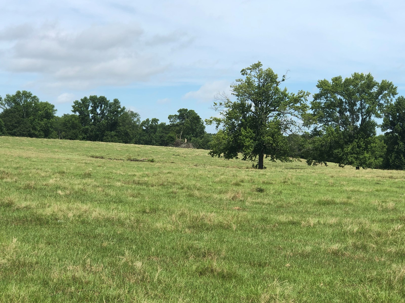 East Tx Ranch Land For Sale 45.3± acre Cattle Land in Texas