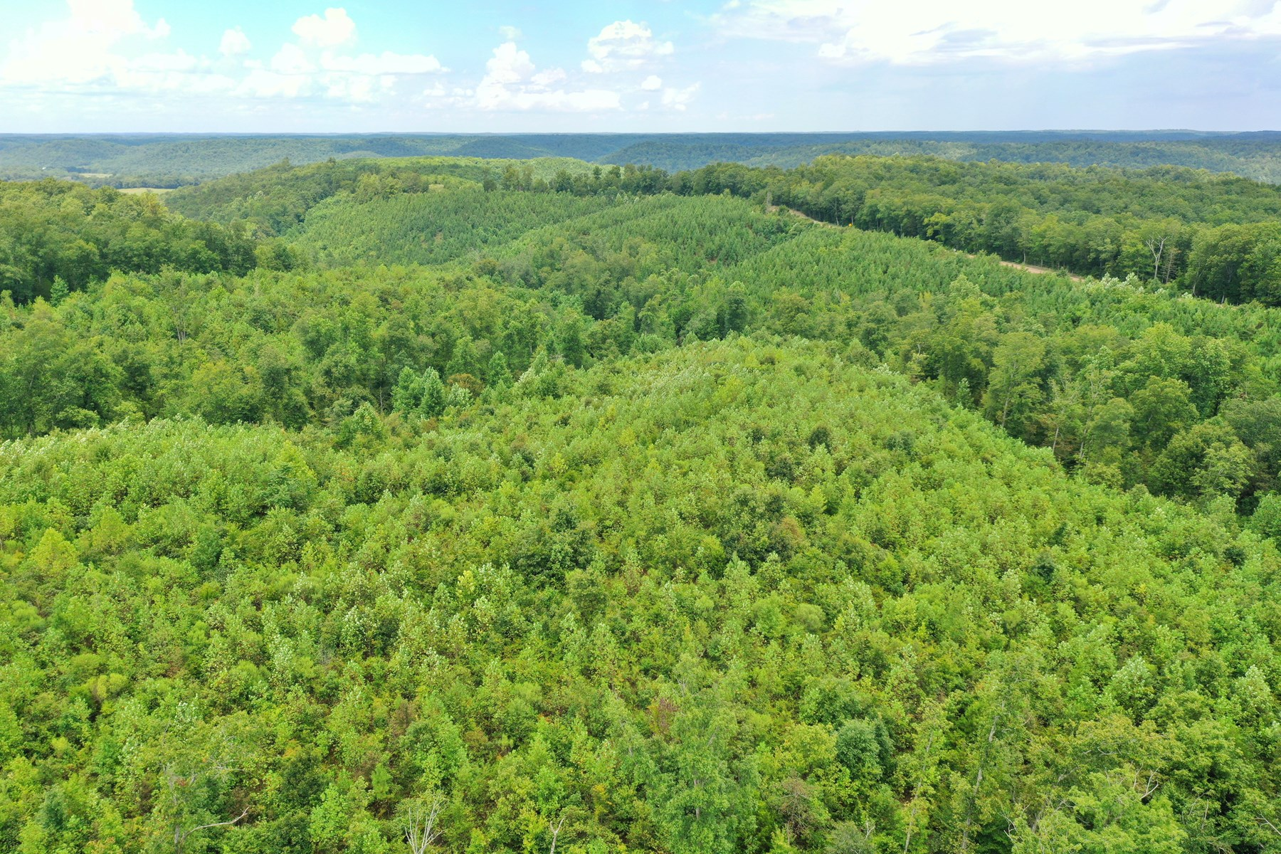 59.11 Acres Secluded hidden valley.