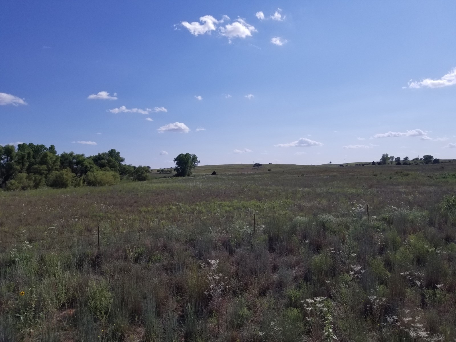 155 acres: grass land with live creek and irrigation well