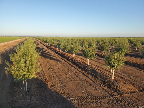 Northern California Almond Orchards For Sale