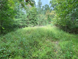SECLUDED LAND FOR SALE IN FLOYD VA