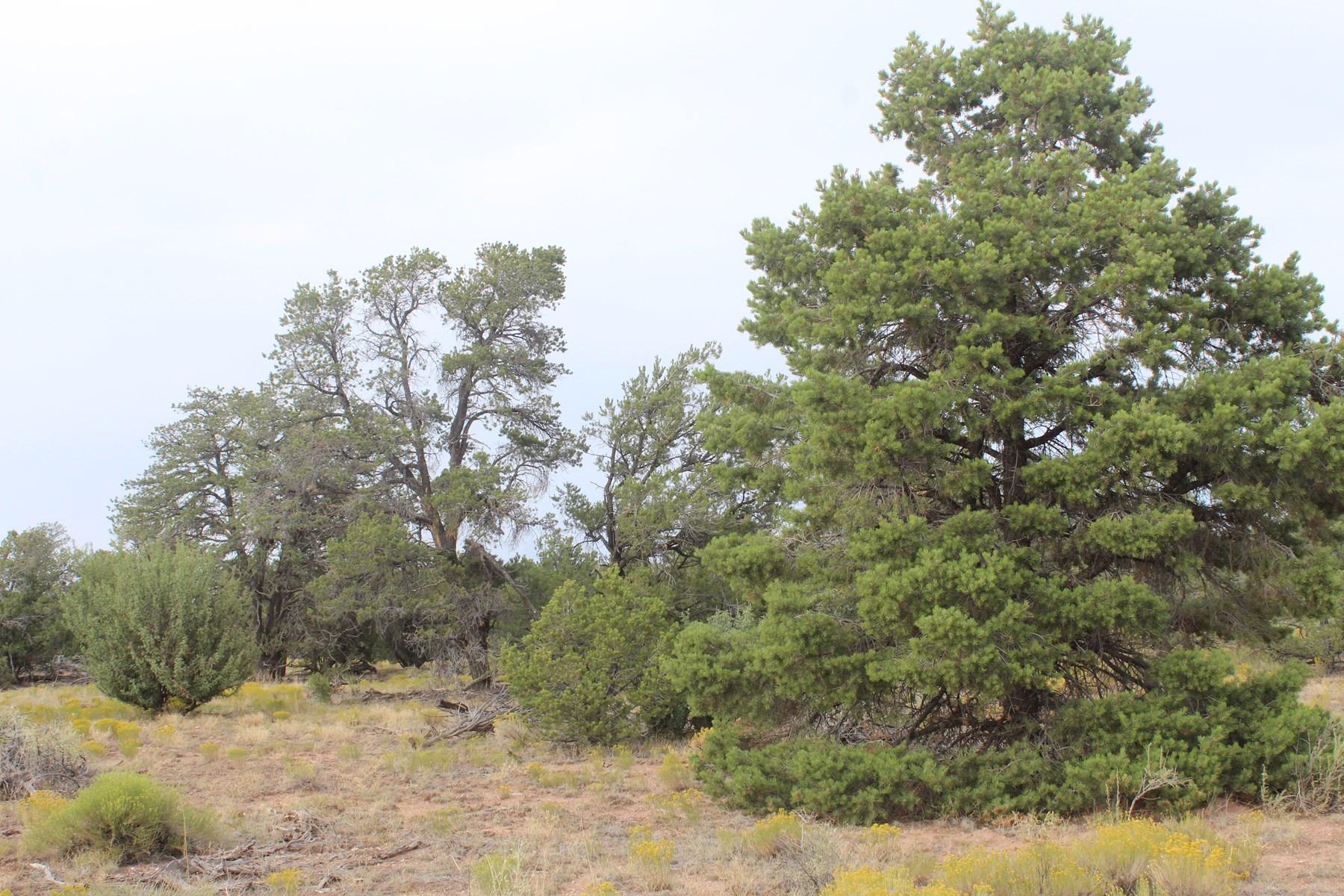 Treed Acreage for sale north of Williams, AZ