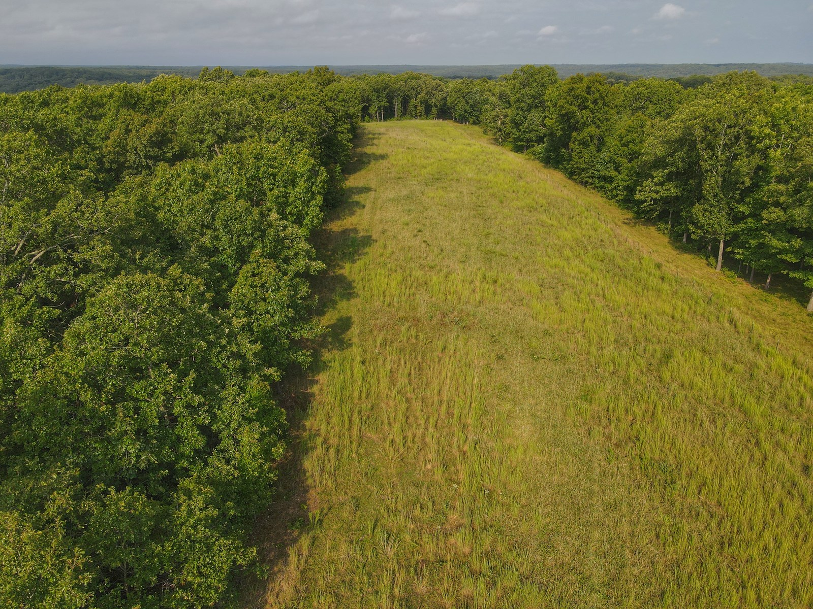 Land for Sale Benton County Mo Edwards 120+/-ac