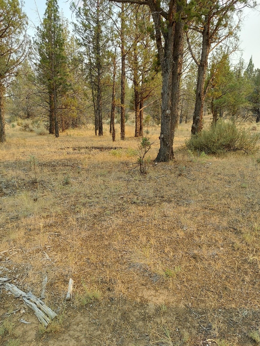 Country Land 2.94 acres For Sale up in Northeastern CA