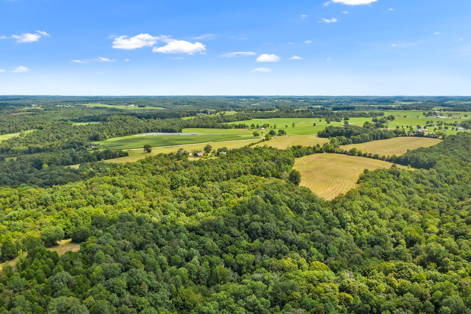 310 Acres, Timber, Hunting & Recreational, 4 Homes for Sale