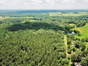 70 ACRES HUNTING TIMBERLAND FOR SALE SOUTHWEST MS