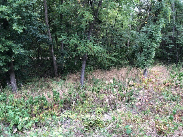 Lot For Sale in NW Arkansas