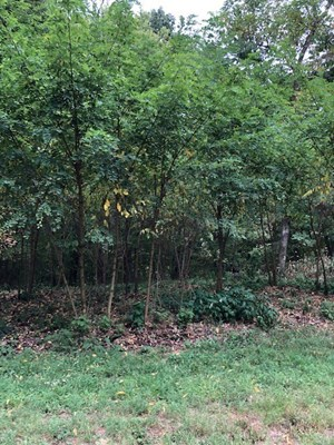 LOT FOR SALE IN AR
