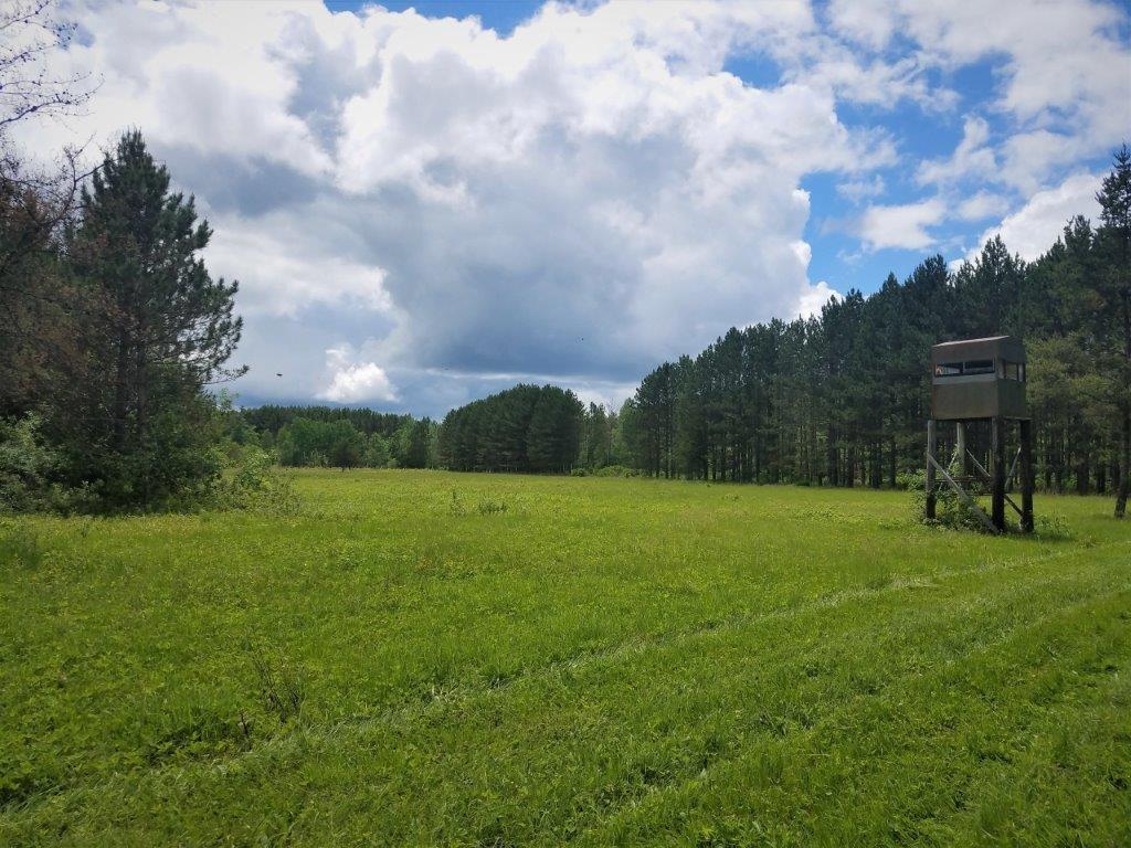 139+/- ACRES  HUNTING/RECREATIONAL LAND AUCTION - SEBEKA MN