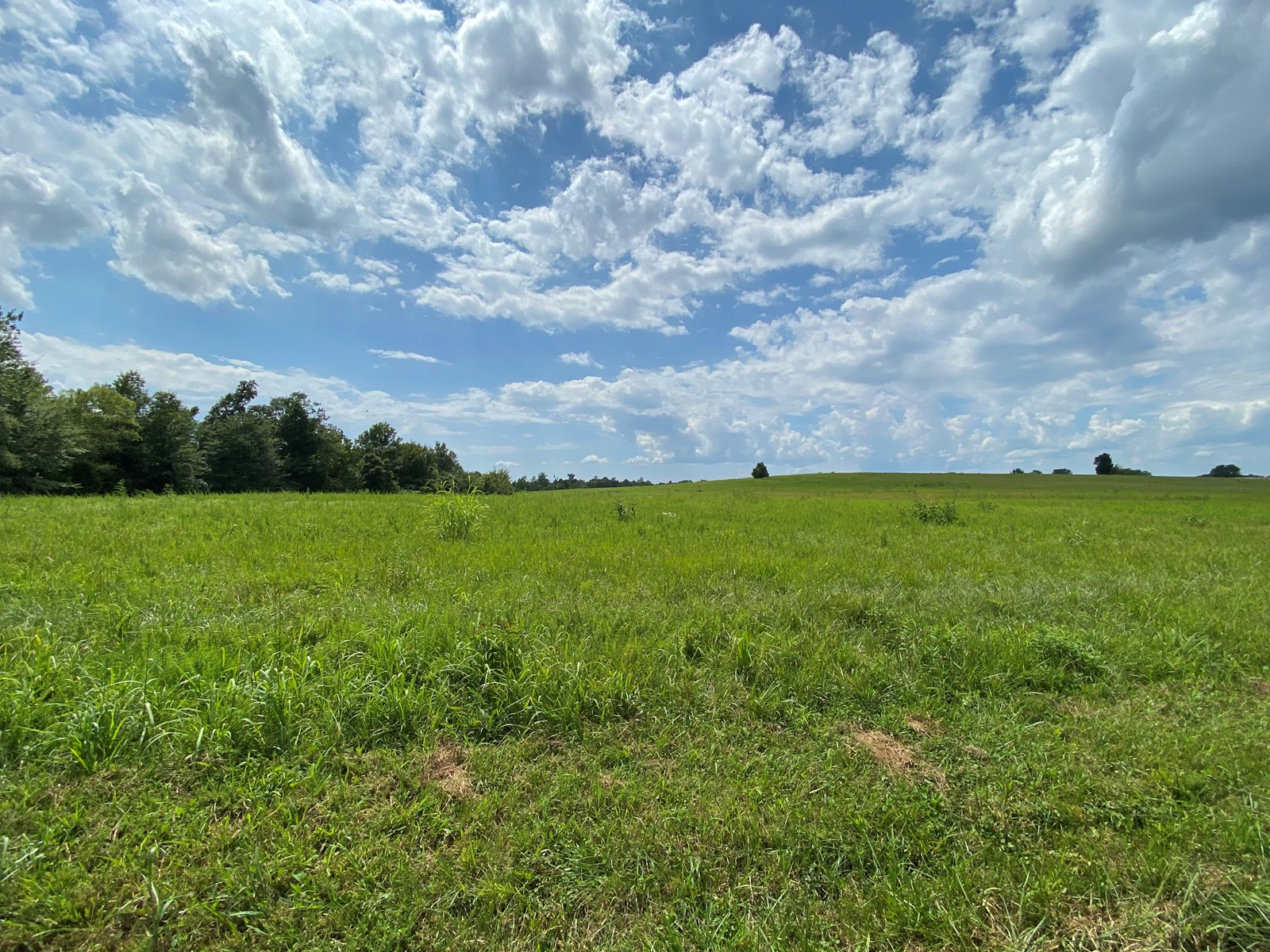 Land Auction -Crop, Pasture, Building & Hunting for Sale