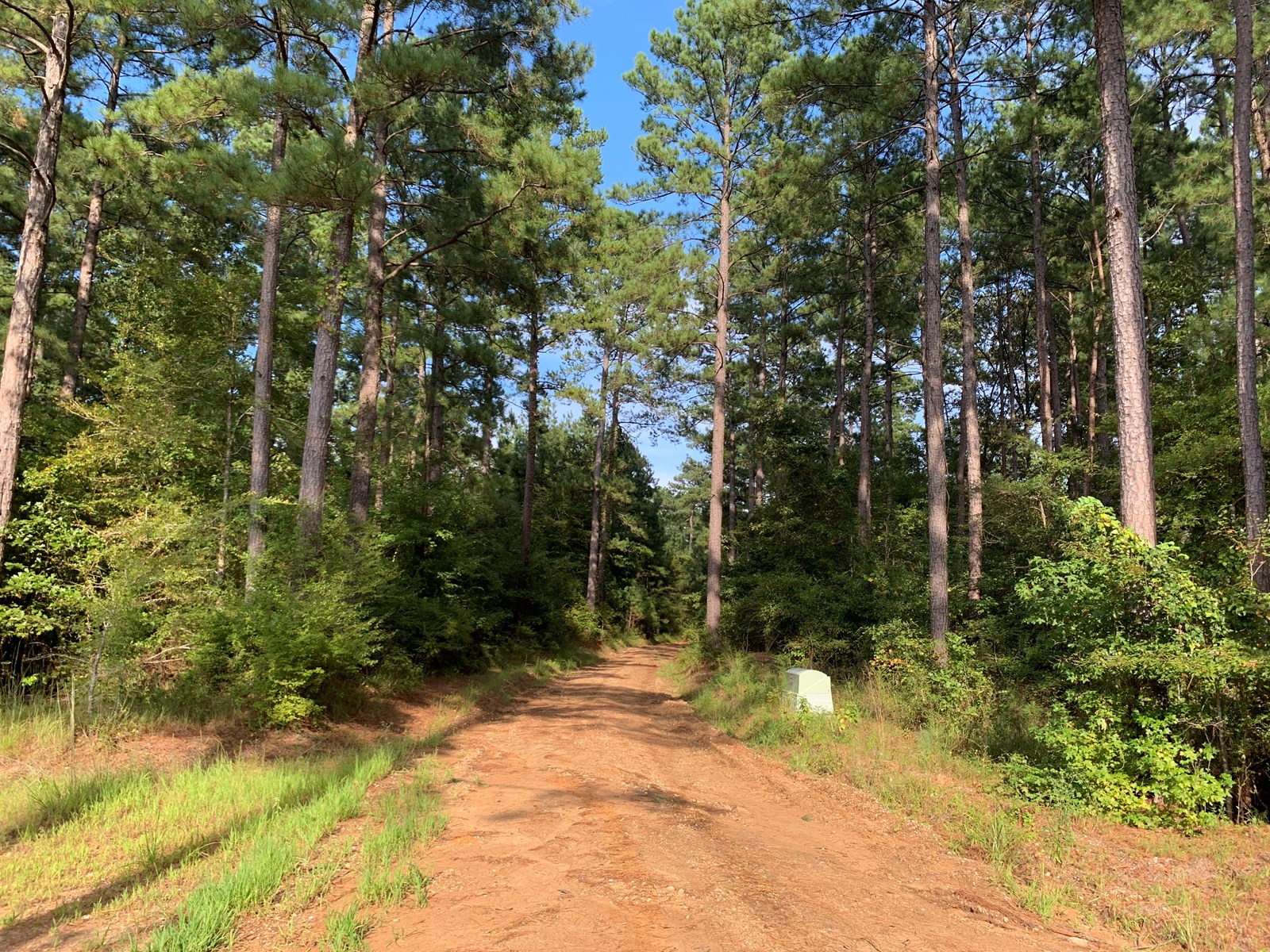 Pine Timber Land W/ Hwy Frontage near Norphlet, AR for Sale