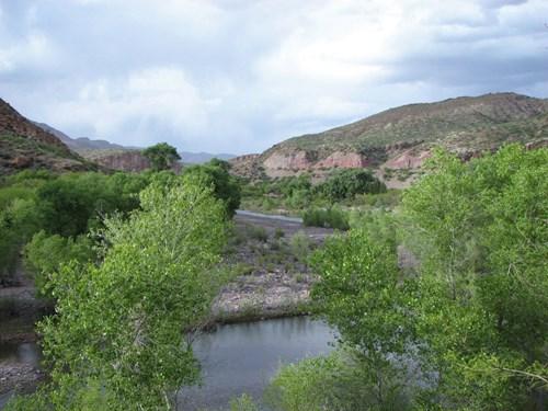 *NEW* 550-600+/- Head Kaler Ranch Holdings, Sheldon, AZ