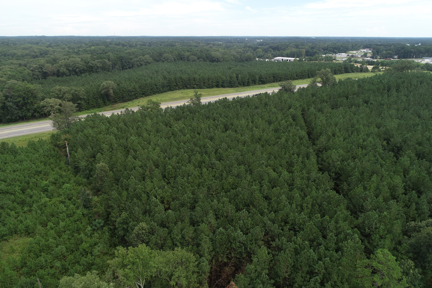 Young Planted Pine Timberland in El Dorado, AR for Sale