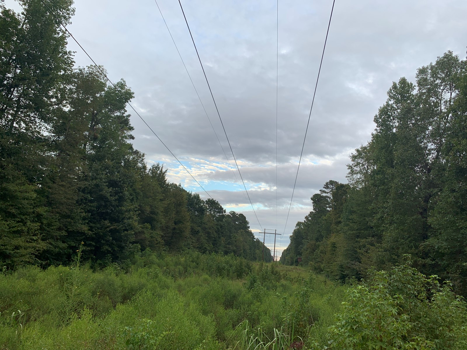 Pine W/ Hardwood Creek Hunting Land for Sale in Southern AR