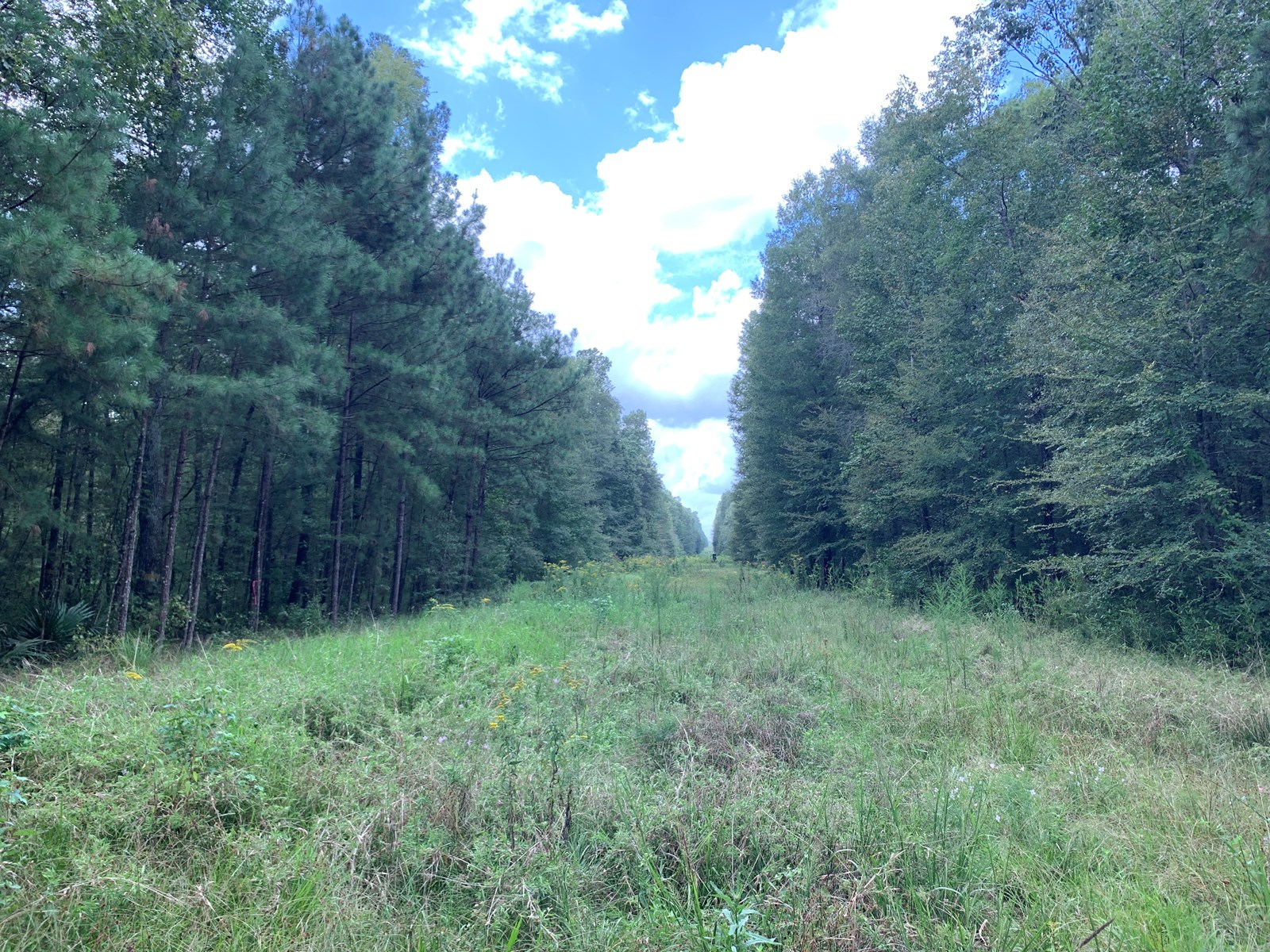 Hardwood Creek Bottom Hunting Land for Sale in Union Co., AR