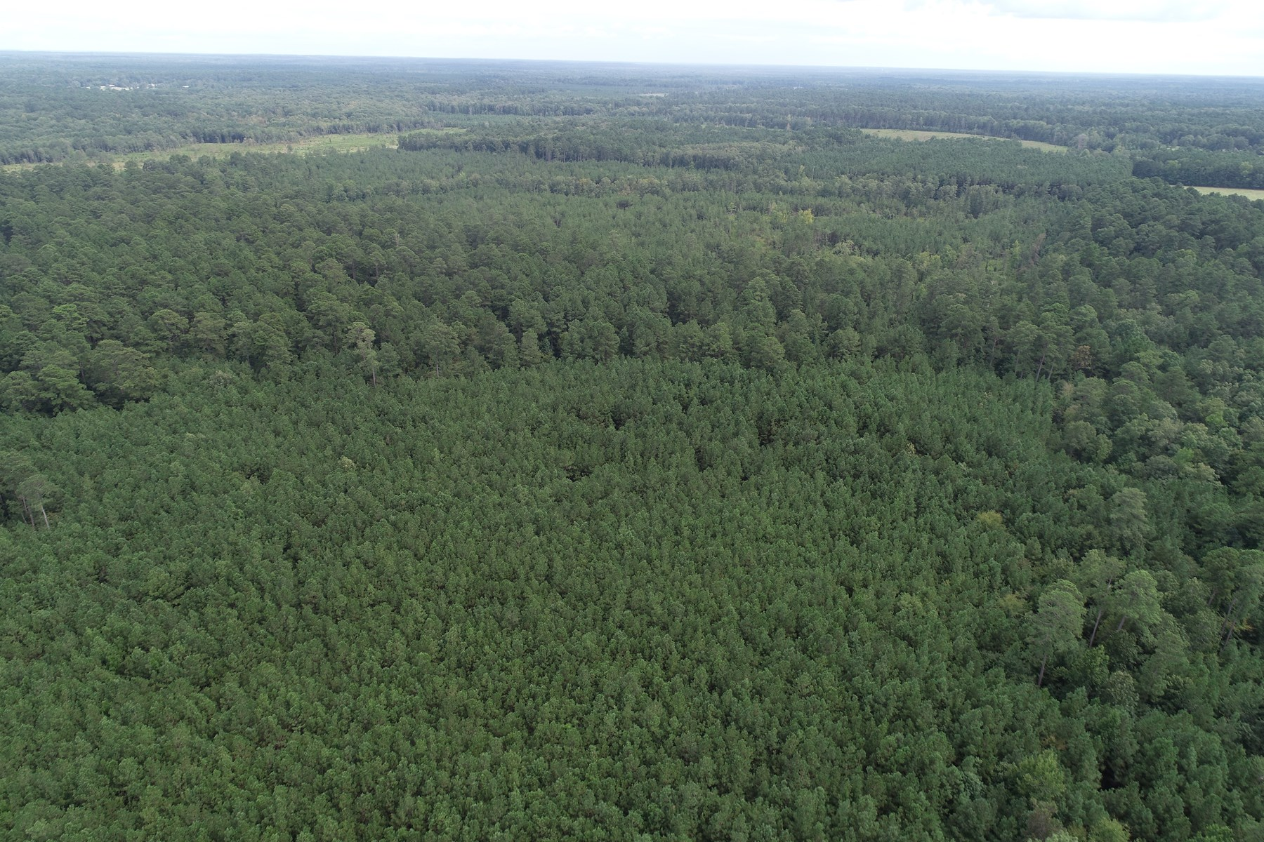 Investment Pine Timberland for Sale in Union County, AR