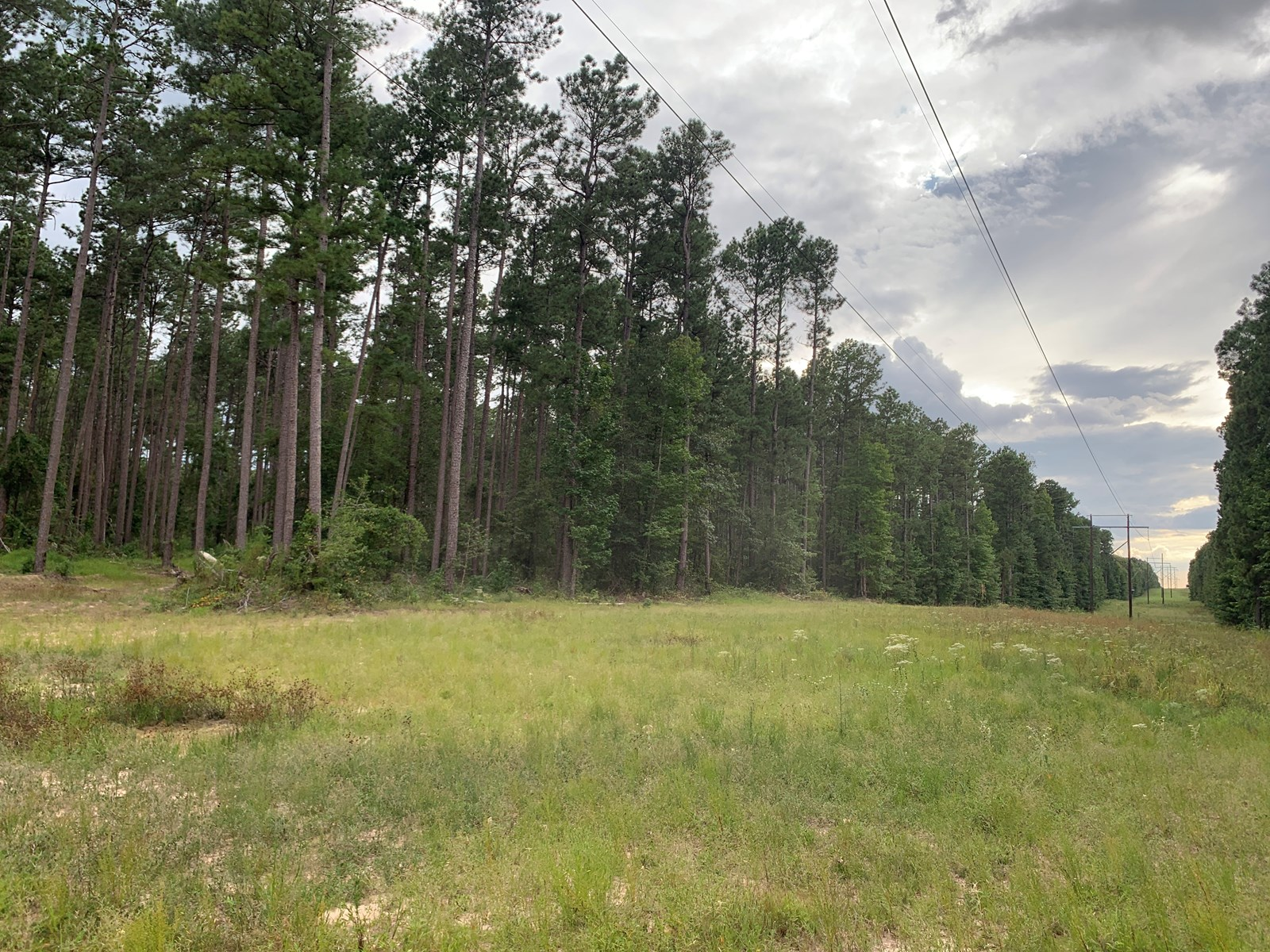 Pine Hunting Timberland for sale in Union County, Arkansas