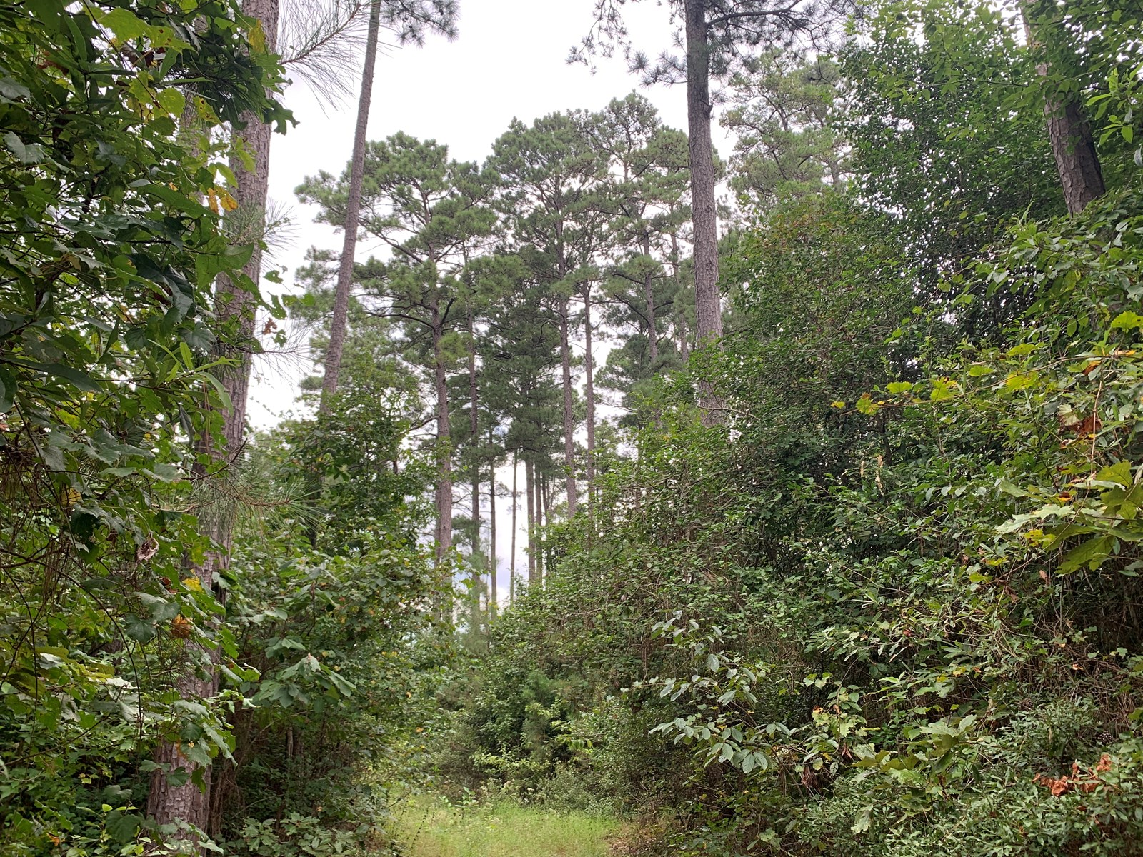 Diverse Pine Land W/ Pipeline RoW for Sale in Southern AR