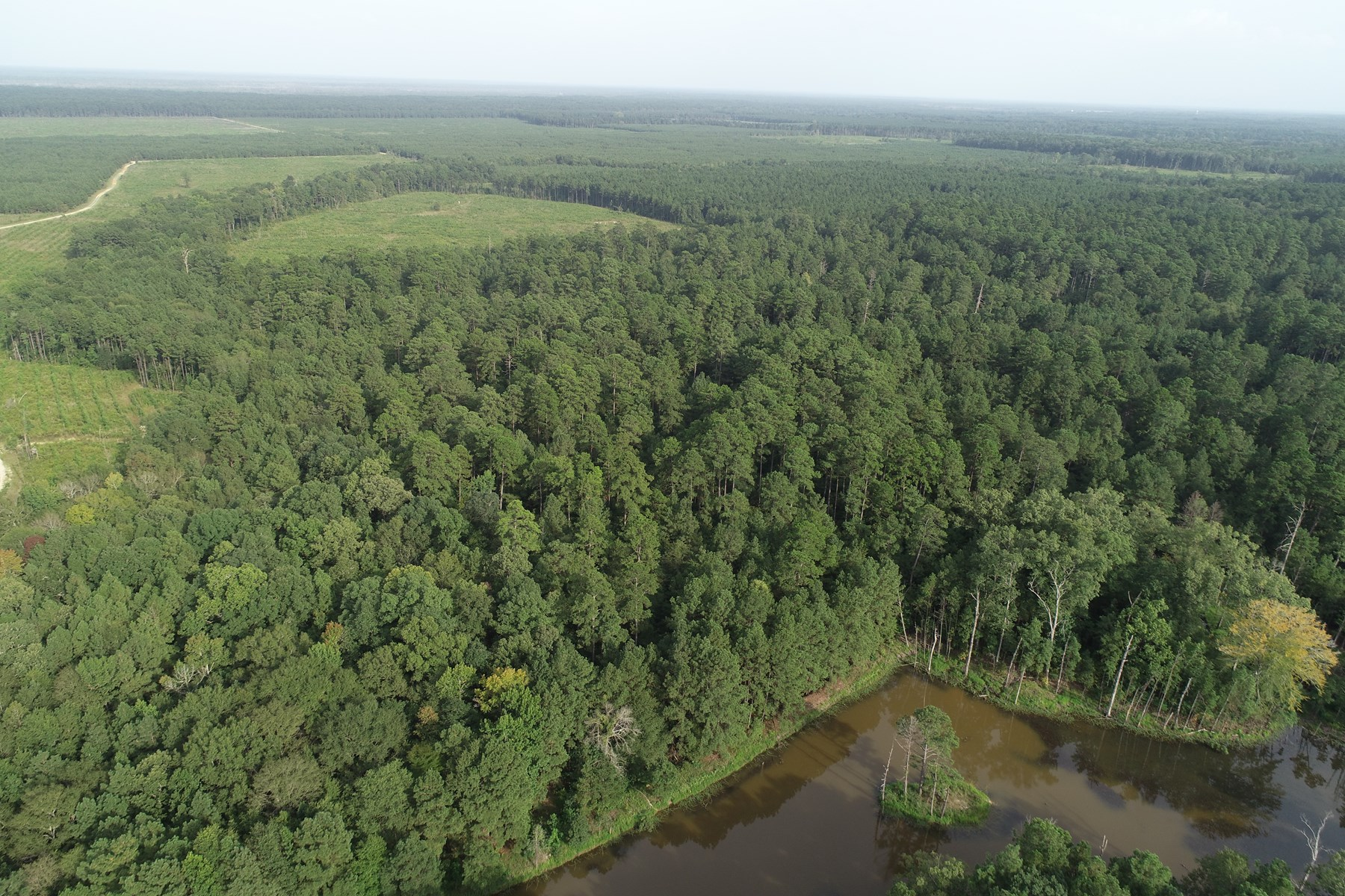 Pine Timber Land in Southeastern Union Co., AR for Sale