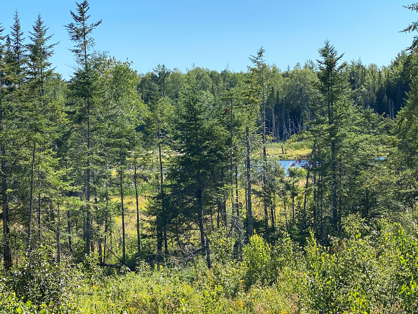 There is a Pond on this Off-Grid Land