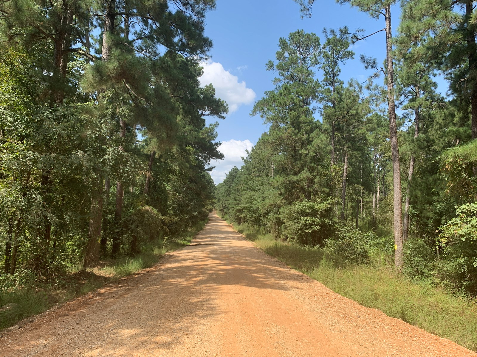 Mature Pine Timberland for sale in Union County, Arkansas