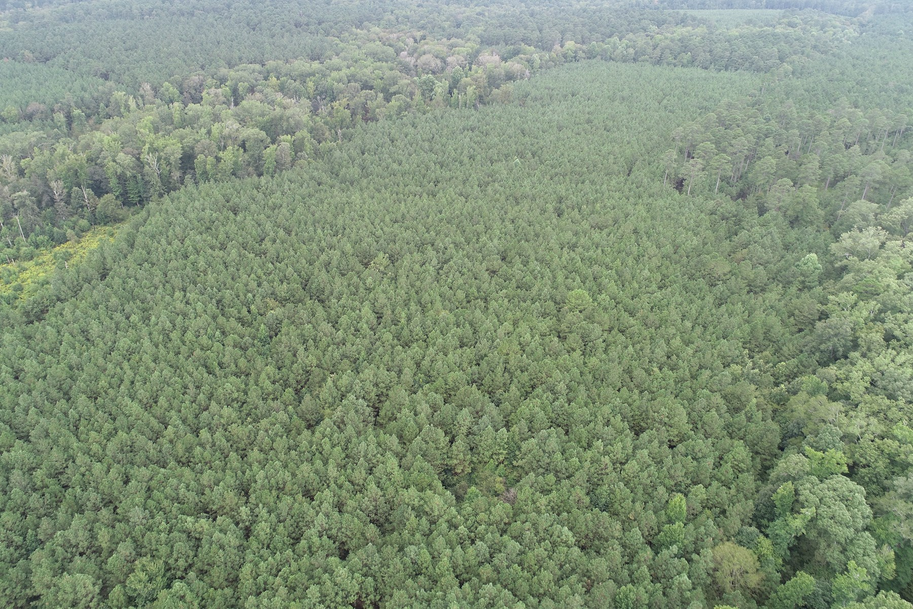 Young Planted Pine W/ Hardwood Land for Sale in Southern AR