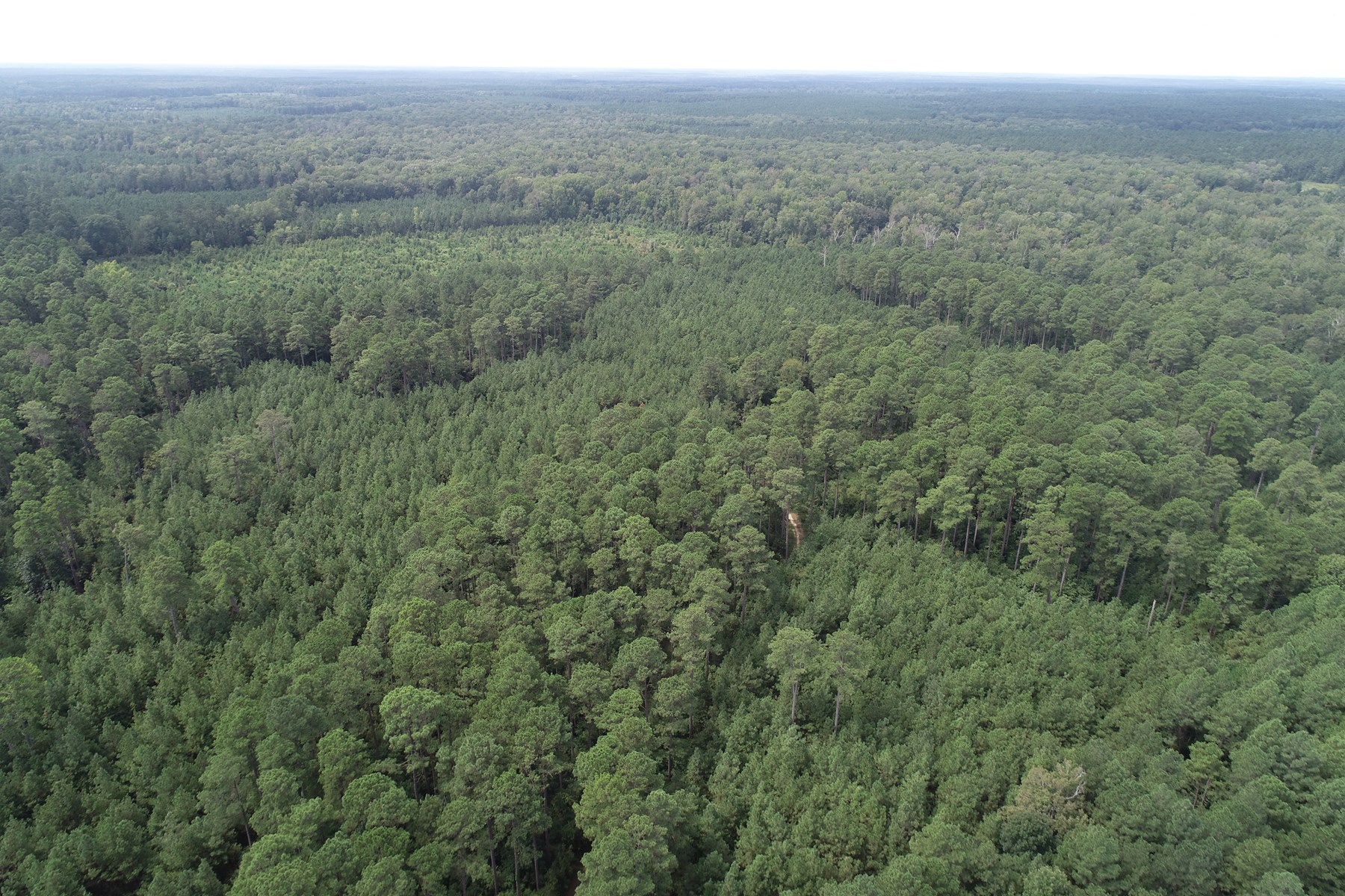 Diverse Recreational Pine Land for Sale in Union Co., AR