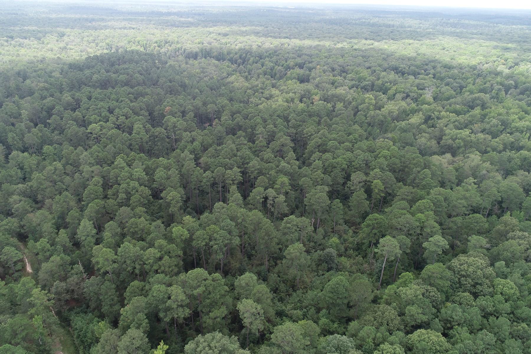 Hardwood-Pine W/ Wetland Habitat in Southern AR For Sale