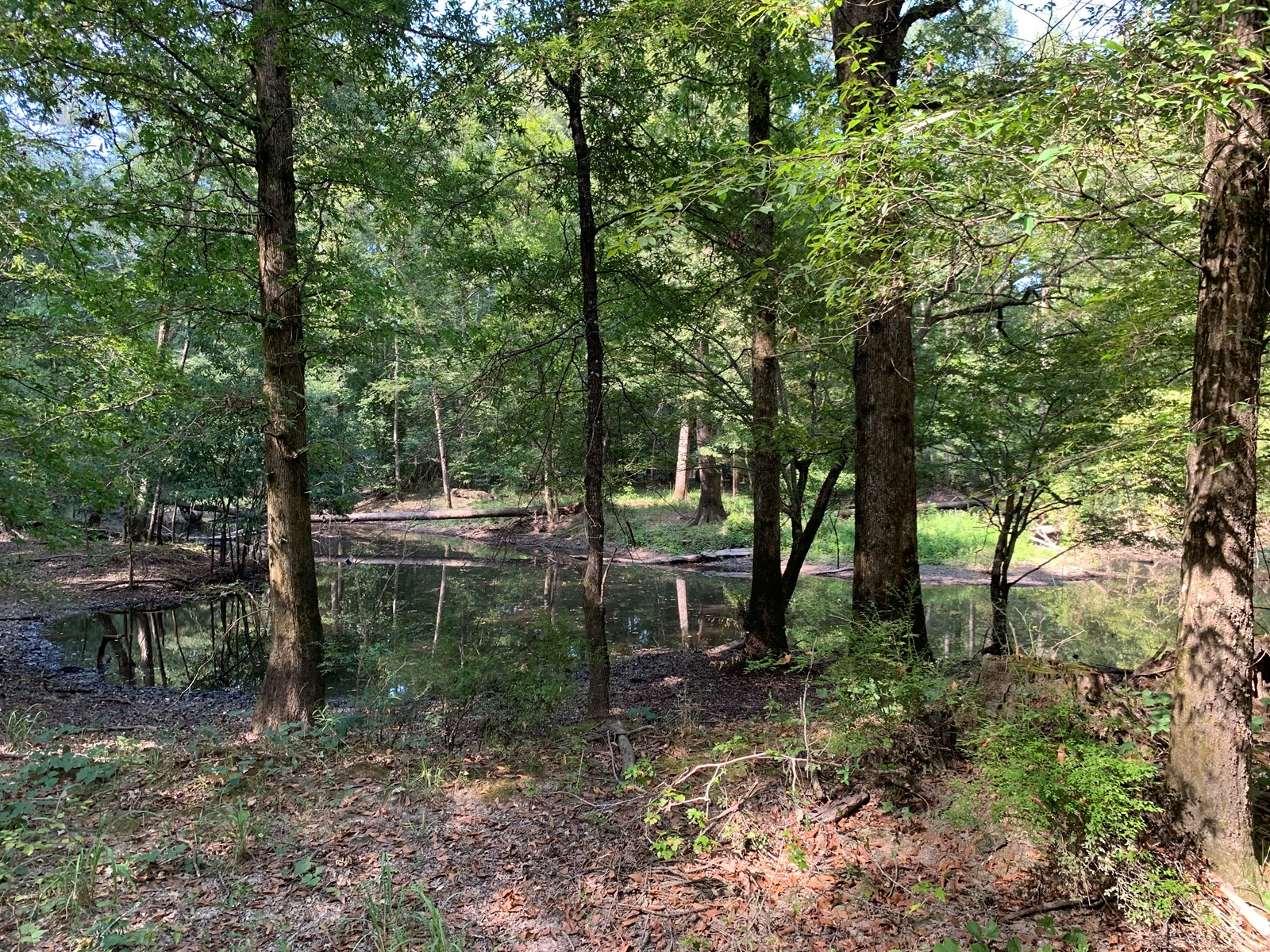 Hardwood Cornie Bayou Hunting Land for Sale in Union, AR