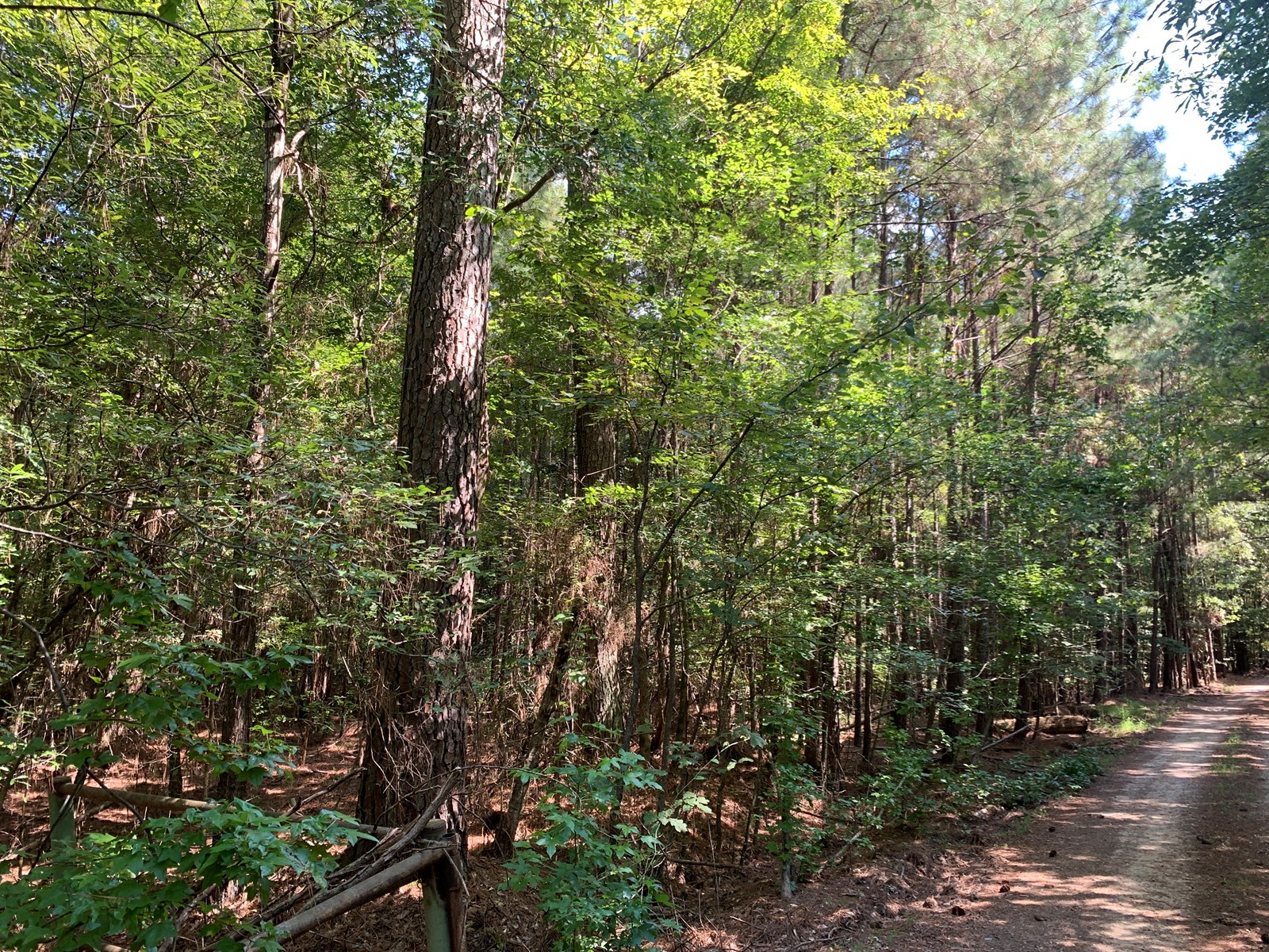 Diverse Natural Pine Timberland For Sale in Union Co., AR