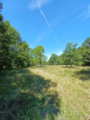 WOODED LAND JOINS NATIONAL FOREST ON 3 SIDES!!