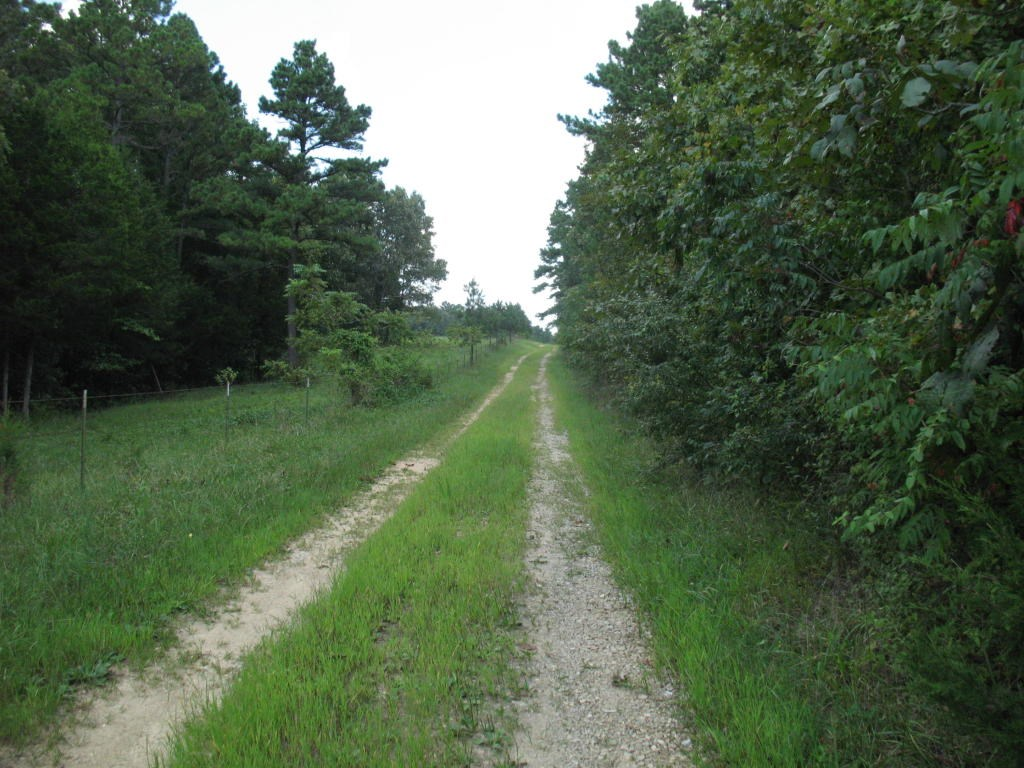 Wooded Land For Sale in South Central Missouri Ozarks