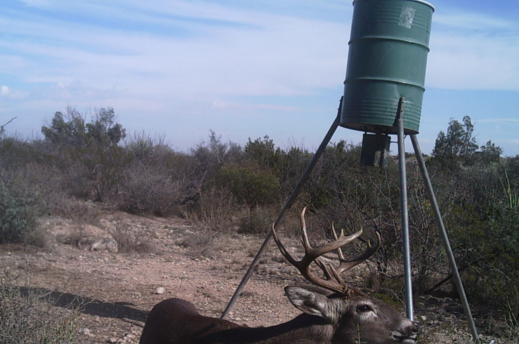 PRIME TIME HUNTING RANCH IN TERRELL COUNTY