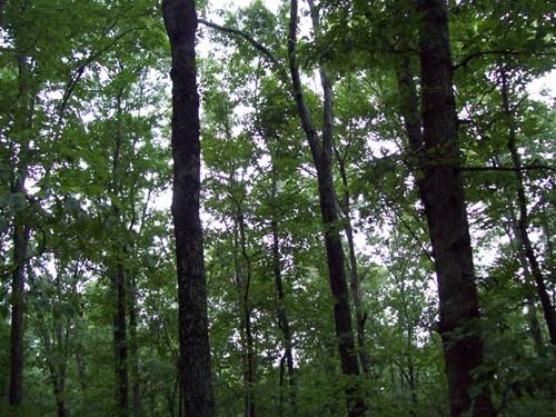 160 +/- Timber Property