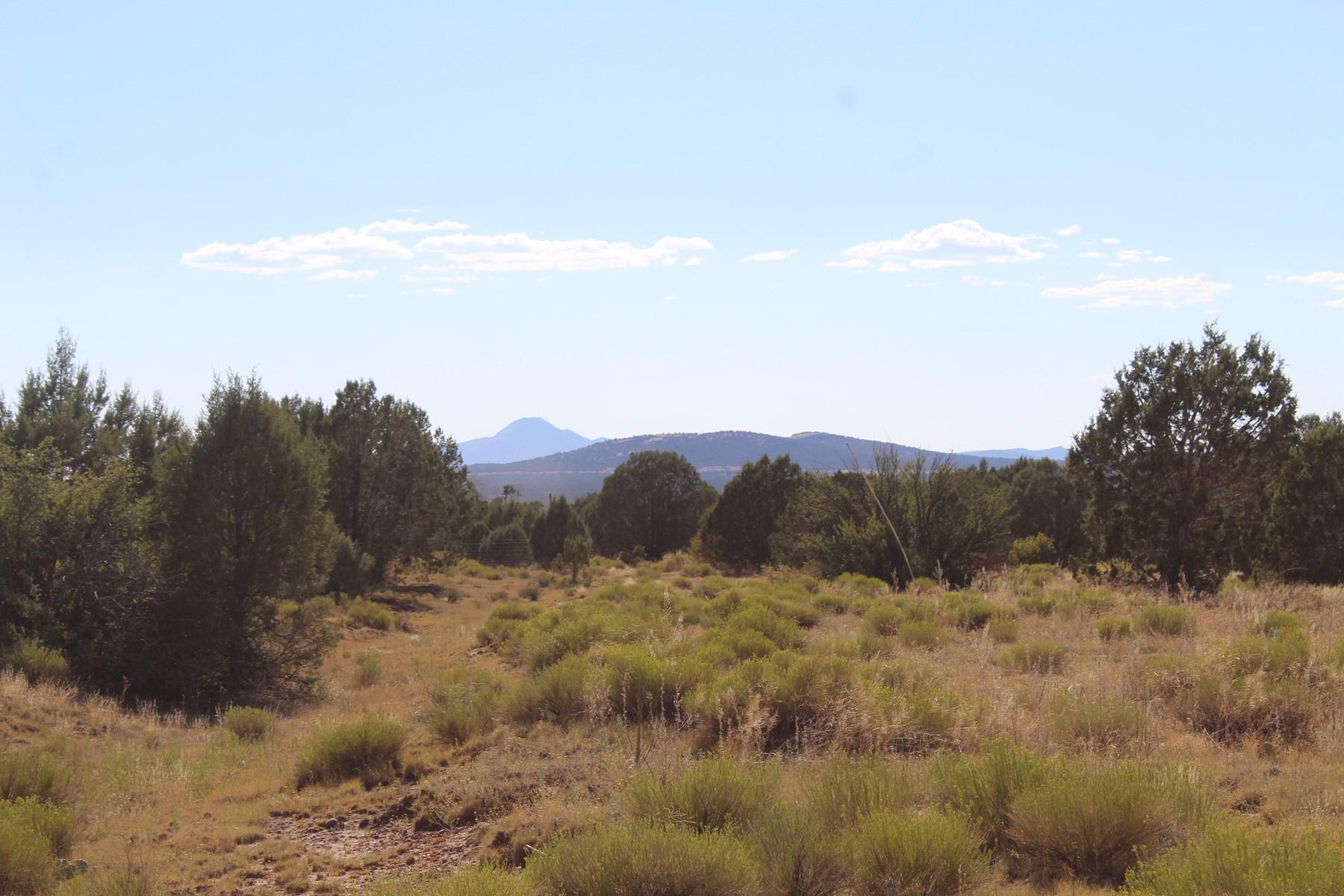 Beautiful 4+ Acres near National Forest in Ashfork