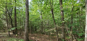 120 ACRES OF WOODLANDS FOR SALE NEAR MUNFORDVILLE KY.