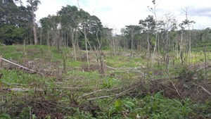 46.4 HECTARES LAND FOR SALE IN DARIEN PANAMA
