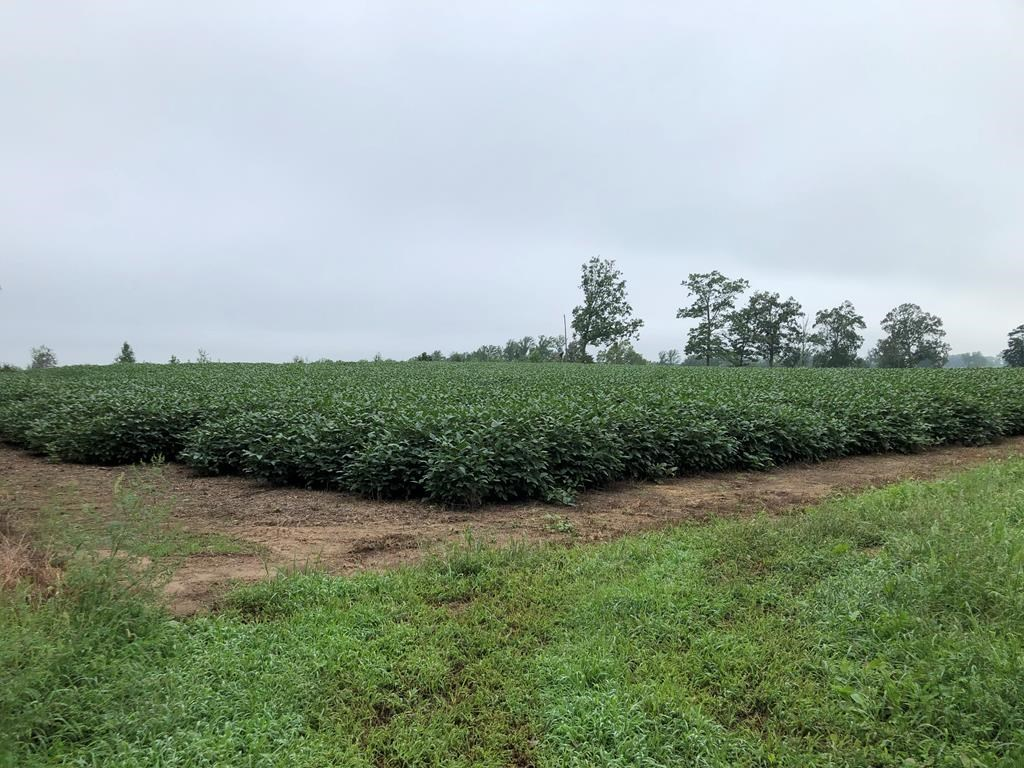 Farming Opportunity In Southern VA