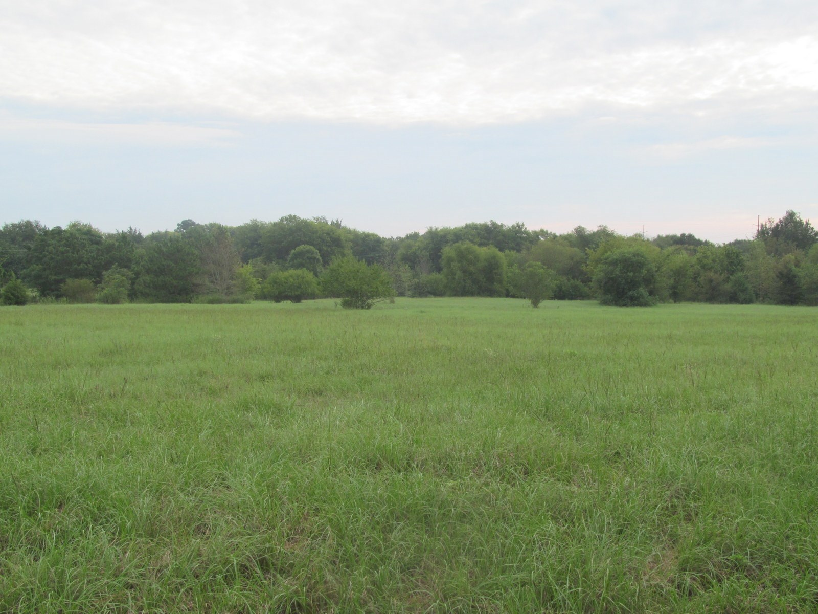 17 ACRES IN WOOD COUNTY TEXAS - WINNSBORO LAND FOR SALE