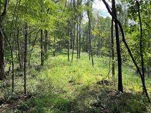 BUILDING LAND FOR SALE NEAR THE TOWN OF FLOYD VA!