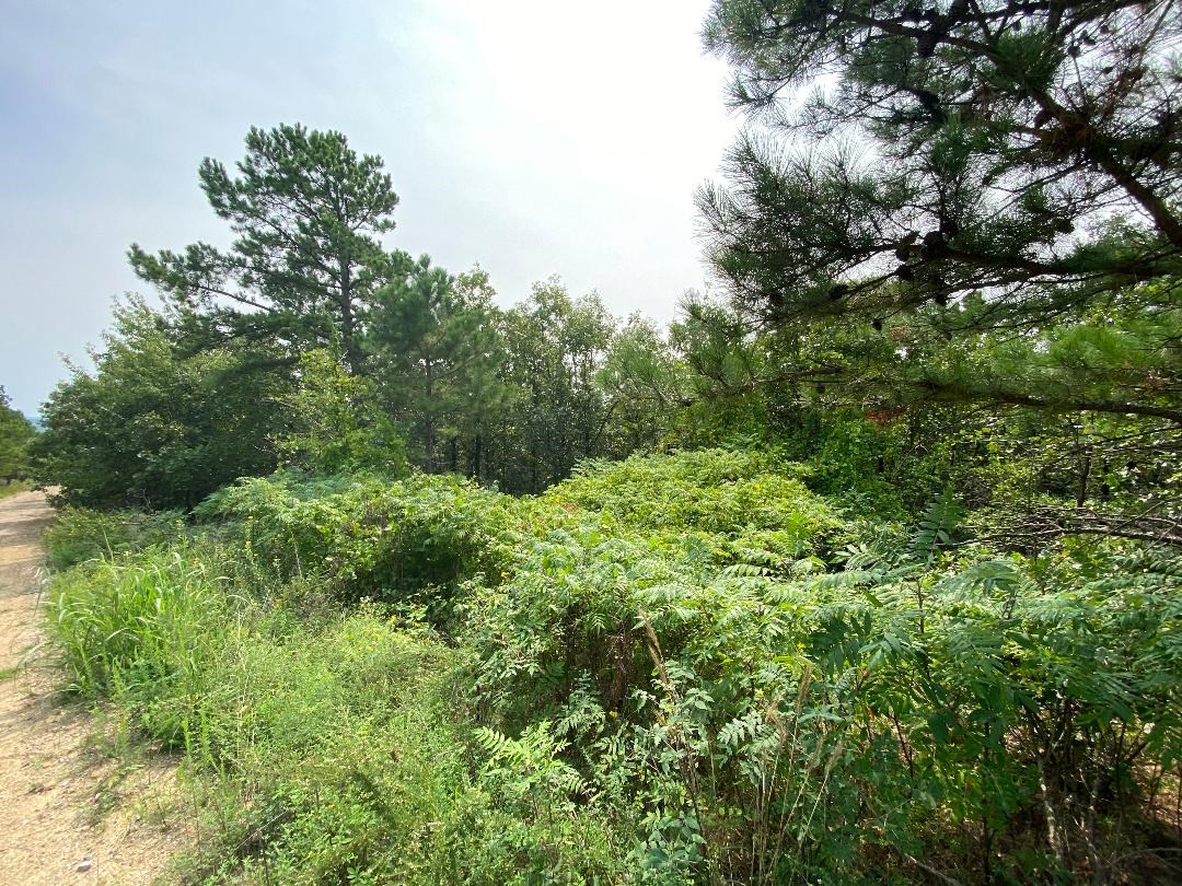 Hunting Land for Sale Latimer Co.