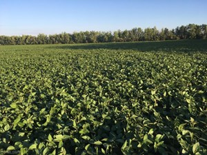 CROP LAND FOR SALE IN LAKE OF THE WOODS CO, BAUDETTE, MN