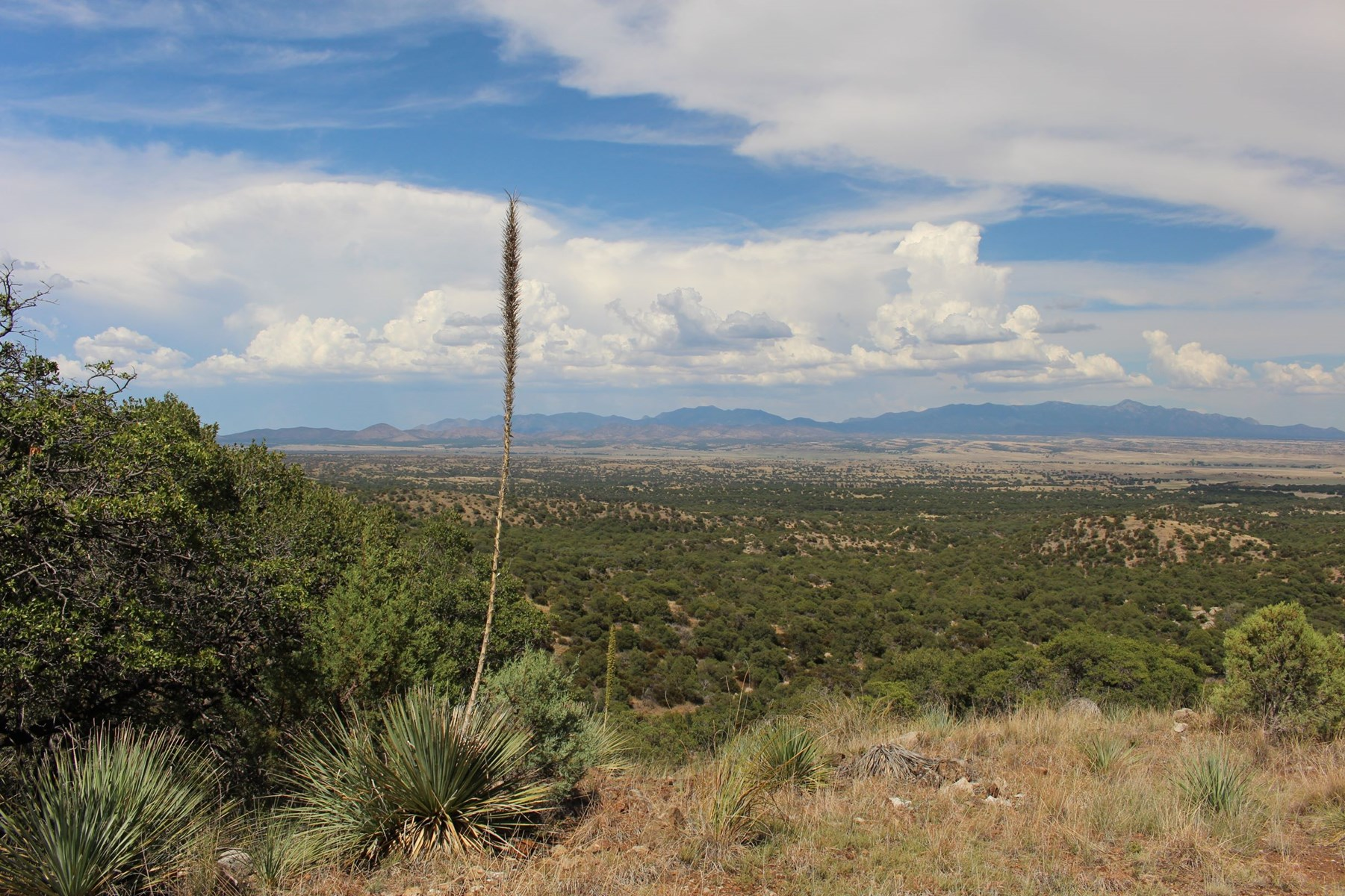 23 +/- Ac, expansive mountain top views of San Rafael Valley