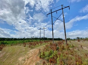 507 ACRES HUNTING LAND FOR SALE IN AMITE COUNTY, MS